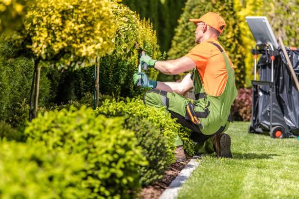 Les 8 meilleurs herbicides de 2020