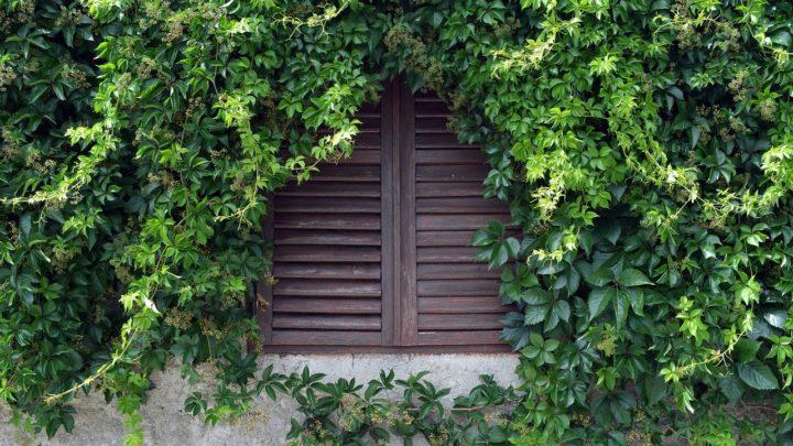 La végétalisation des façades